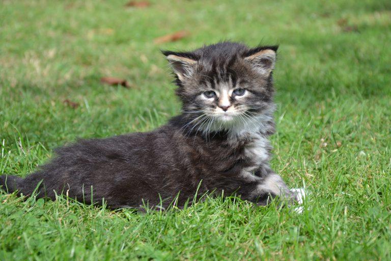 vom Wundersee - Top Cat Breeders